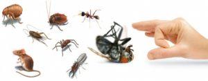 مكافحة حشرات وقوارض بالمدينة المنورة