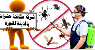 افضل شركة مكافحة حشرات بالمدينة المنورة