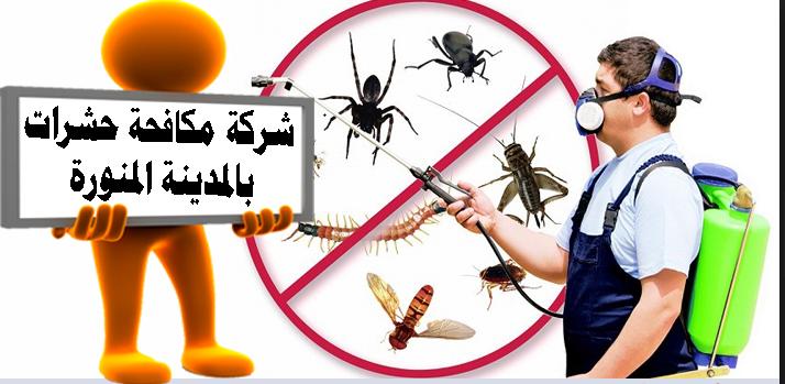 أفضل شركة مكافحة حشرات بالمدينة المنورة