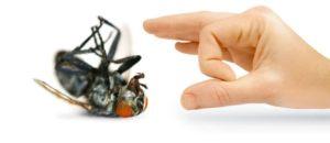 شركة مكافحة حشرات ببريدة